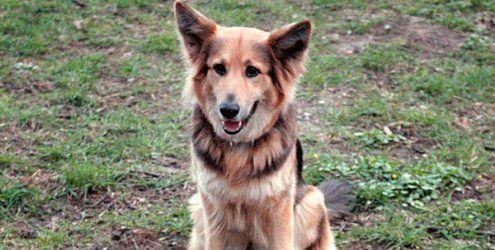 Hund durch Tierköder im Prater schwer verletzt: Polizei warnt