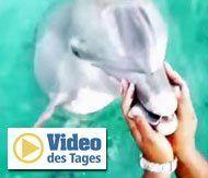 Delfin fischt Handy aus dem Wasser