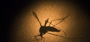 Zika-Virus: IAEA bietet in Wien Hilfe durch Moskito-Sterilisierung an