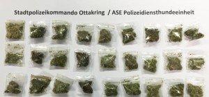 Drogenhandel in Ottakring: 101 Cannabispäckchen sichergestellt