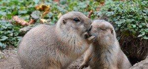 Valentinstag im Tiergarten Schönbrunn: Halber Eintritt und Gratis-Führungen