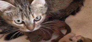 Diese Katze hat ein Herz für Hörnchen