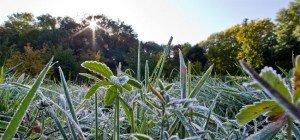 Nach Kälteeinbruch wird das Wetter zum Wochenende wieder milder