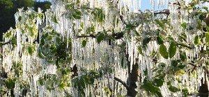 Frost führte laut Rupprechter zu existenzbedrohenden Schäden