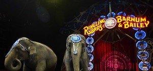 US-Zirkus Ringling gibt legendäre Elefantenshow auf