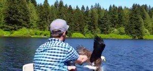 Diebischer Seeadler: Danke fürs Rausziehen!