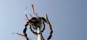 Wiener Boku-Studenten fladerten Maibaum und fuhren mit ihm Bim