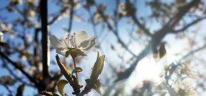 Frühling kommt ab Donnerstag zurück