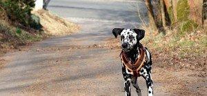 Wurst-Köder mit Rasierklingen-Teilen: Hund im Burgenland verletzt