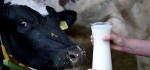 EU-Agrarminister verabschieden neues Milch-Hilfspaket
