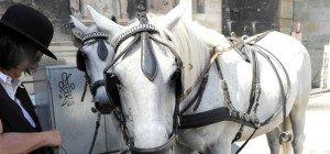 Neuregelung: Fiaker-Pferde bekommen ab 35 Grad hitzefrei