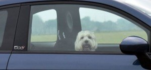 Zwei Hunde in Wien-Liesing starben bei Hitze qualvoll in Auto