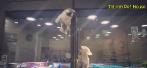 Dieses Kätzchen kämpft um seine Liebe