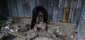 Verwahrloste Tiere aus Zoo in Gaza gerettet