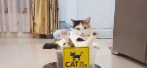 """""""They see me rollin'…"""" – die gechillteste Katze der Welt"""