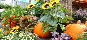 Zierpflanzen für den Herbst im VOL.AT-Gartentipp