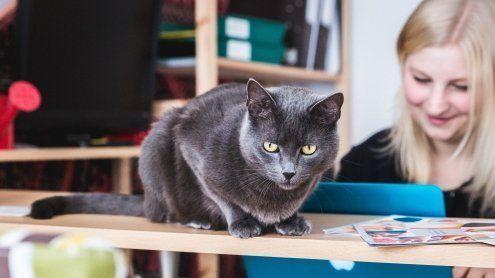 Wiener Psychotherapie-Praxis setzt bei Behandlung auf Katzen