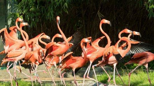 Wiener Tiergarten Schönbrunn hat die Vogelgrippe überstanden