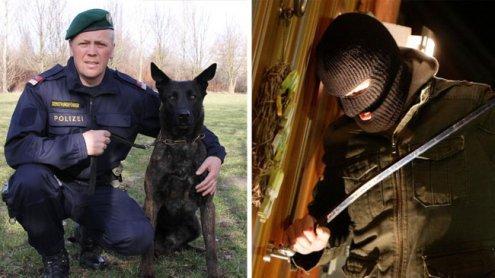 Polizeihund stöberte Einbrecher im Donaukanal kauernd auf