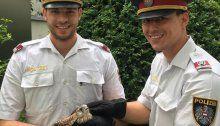 Polizisten retten flugunfähigen Falken