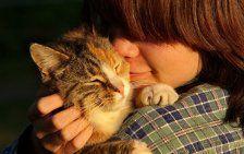 Darum fühlen wir uns mit Katzen wohl