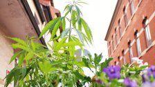 Aktivisten pflanzen Cannabis in Göttingen