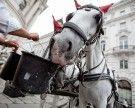"""""""Nur"""" 34,7 Grad: Kein Hitzefrei für Fiaker-Pferde in Wien"""