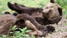 Gehege nicht artgerecht: Zoo tötete Braunbären