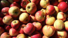 Äpfel und Kartoffeln 2017 empfindlich verteuert