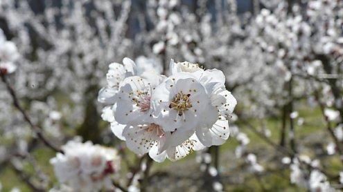Sehr warmer April: Natur holt Temperaturrückstand wieder auf