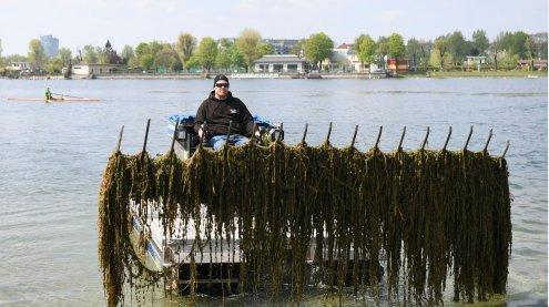 Mit Mähbooten gegen unbeliebte Wasserpflanzen auf Wiener Donau