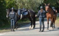 Gerüchte um Mehrkosten für berittene Polizei in Wien